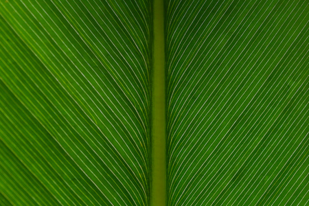 Close up of macro detailed and symmetrically natural leaf texture - used for ecology and nature background