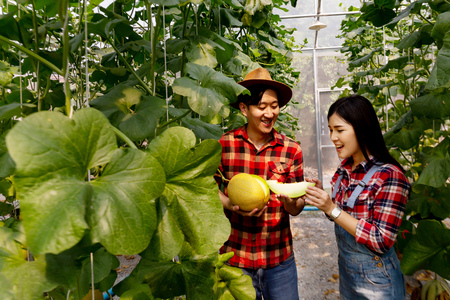 Asian young couple farmers wearing red checkered shirt together and happily gardening and harvesting a melon fruit in garden field Stok Fotoğraf