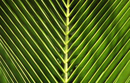 close-up van een palmboom-blad of een detail van een palm-blad