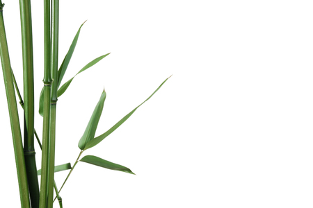 border of bamboo-leaves isolated on white with copy-space