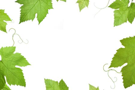 frame of grape or vine leaves isolated on white background with copyspace in the centre .Please take a look at my other images of grape-leaves