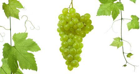 achtergrond van druiven en wijnbladeren-geïsoleerd op een witte achtergrond.Neem een kijkje op mijn andere beelden van druif-bladeren