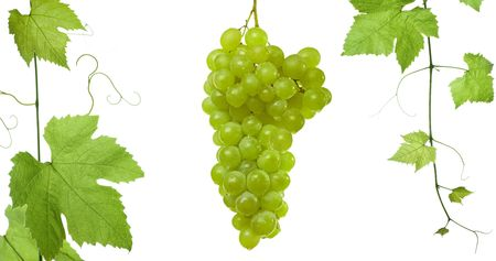 backdrop of grapes and vine-leaves isolated on white background.Please take a look at my other images of grape-leaves