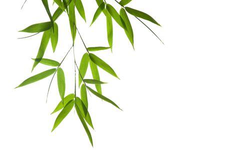Afbeelding met hoge resolutie van natte bamboe-bladeren geïsoleerd op een witte achtergrond. Neem een kijkje op mijn soortgelijke bamboe-afbeeldingen