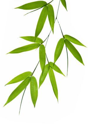 Hoge resolutie afbeelding van natte bamboe-bladeren geïsoleerd op een witte achtergrond. Neem een kijkje op mijn soortgelijke bamboe-beelden Stockfoto