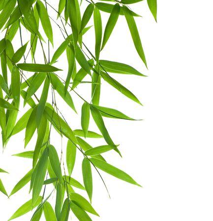 Hoge resolutie afbeelding van de grens met natte bamboe-bladeren geïsoleerd op een witte achtergrond. Neem een kijkje op mijn soortgelijke bamboe-beelden Stockfoto