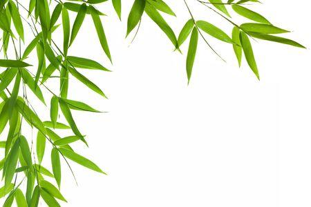 Afbeelding met hoge resolutie van grens met natte bamboe-bladeren geïsoleerd op een witte achtergrond. Neem een kijkje op mijn soortgelijke bamboe-afbeeldingen Stockfoto