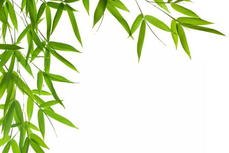 textfield: High resolution image of border with wet bamboo-leaves isolated on a white background. Please take a look at my similar bamboo-images