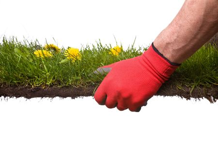 holding a piece of grass, metaphor for gardening or creating a garden Stockfoto