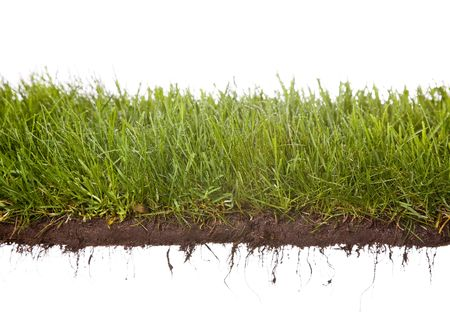 strip of grass with dewdrops, dirt, and roots isolated on white background.