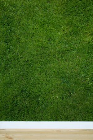 wallpaper with grass texture Stock Photo - 3635577