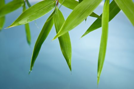 High resolution image of wet bamboo-leaves . Please take a look at my similar bamboo-images Stock Photo - 3675562