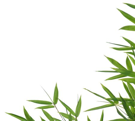 textfield: bamboo-leaves isolated on a white background. Please take a look at my similar bamboo-images