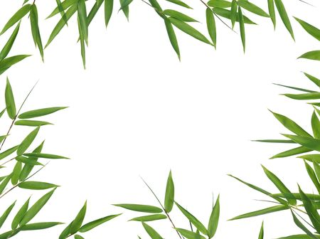 textfield: frame of bamboo-leaves isolated on a white background. Please take a look at my similar bamboo-images Stock Photo