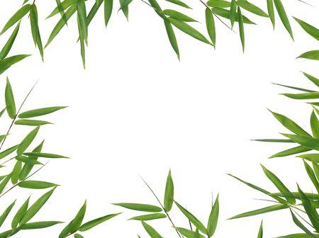 frame van bamboe-bladeren geïsoleerd op een witte achtergrond. Neem een kijkje op mijn soortgelijke bamboe-afbeeldingen