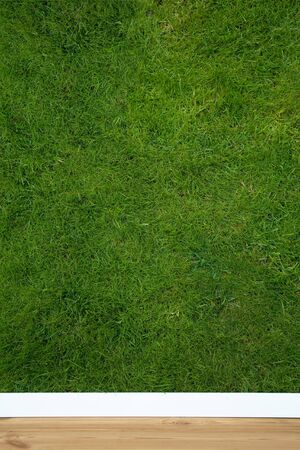 natural wallpaper with grass structure Stock Photo - 3690372
