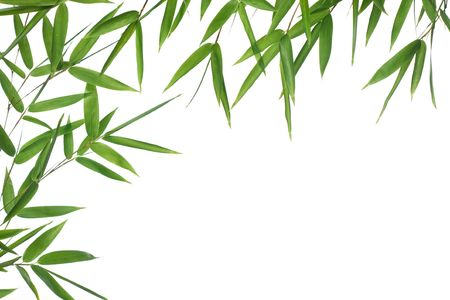 High resolution image of wet bamboo-leaves isolated on a white background. Please take a look at my similar bamboo-images