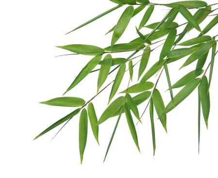 Afbeelding met hoge resolutie van natte bamboe-bladeren op een witte achtergrond geïsoleerd. Neem mijn soortgelijke bamboe-afbeeldingen bekijken Stockfoto