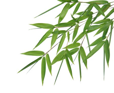 bamboo leaves: High resolution image of wet bamboo-leaves isolated on a white background. Please take a look at my similar bamboo-images