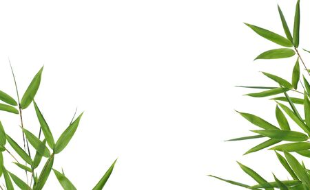 textfield: border of bamboo-leaves ,isolated on a white background Stock Photo