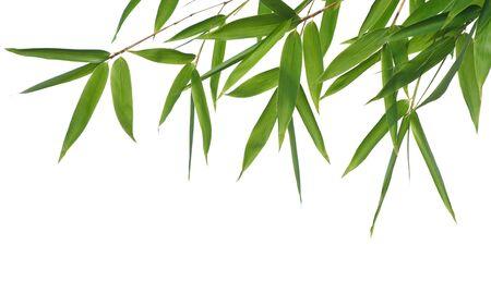 bamboe-bladeren geïsoleerd op een witte achtergrond. Neem een kijkje op mijn soortgelijke bamboe-beelden
