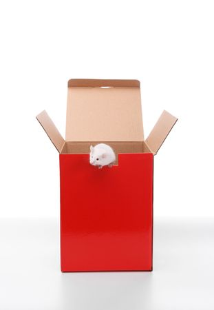 mouse outside the box,isolated on white background Stock Photo - 3955688