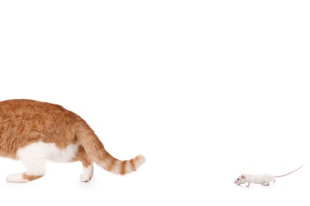 humor concept with cat and mouse Stock Photo - 3998924