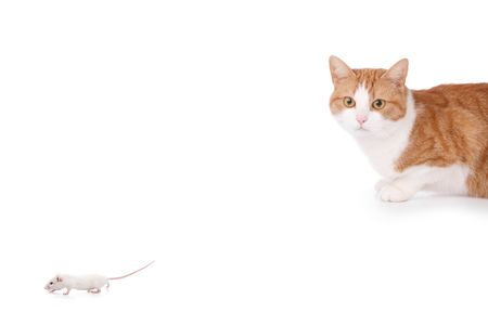 humor concept with cat and mouse photo