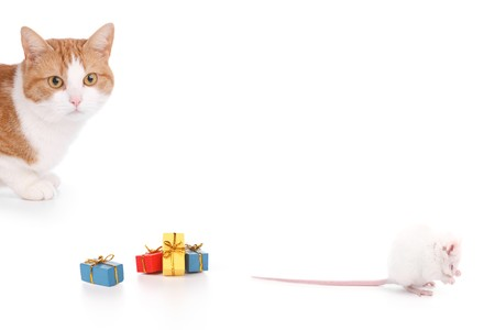 cat and mouse having a party on a white backgroun photo