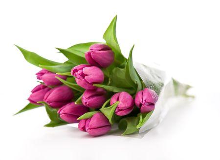 paarse tulpen geïsoleerd op een witte background.please eens een kijkje op mijn andere foto's over dit onderwerp