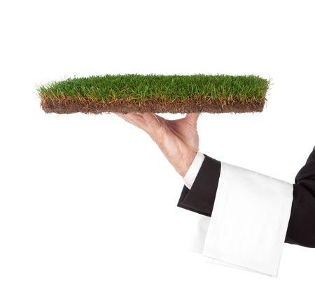 serveur avec un bac vert. Concept organique