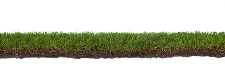 bande d'herbe naturelle avec des racines et la saleté, isolé sur un fond blanc