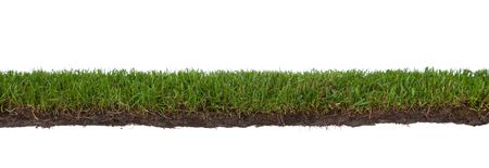 cut grass: natural strip of grass with roots and dirt, isolated on a white background