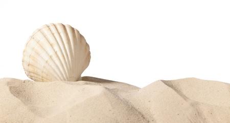 shell op strand geïsoleerd op een witte achtergrond, met een heleboel kopie-ruimte Stockfoto