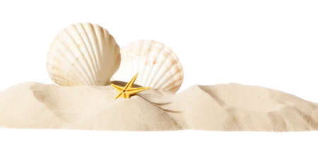 shell on beach isolated on a white background, personal editing