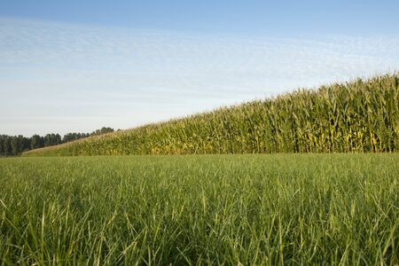 hz: corn cornfield Stock Photo