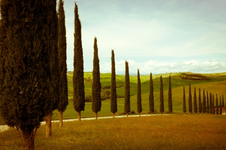 typical tuscan countryside with cypress and meadow