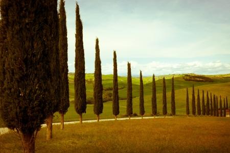 typique campagne toscane de cyprès et de prairie Banque d'images