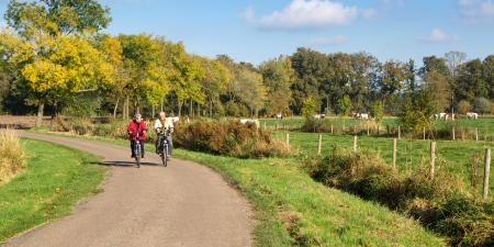 Senior man and woman exercising with bicycles on a countryroad Stockfoto