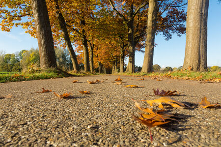 country road  lined with oak trees   netherlands  photo