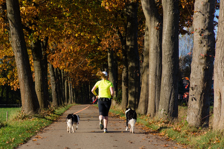 Woman runner running with two dogs on a dutch country road in autumn nature