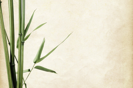 vintage background: bamboo leaves border on vintage old paper background with copy space Stock Photo