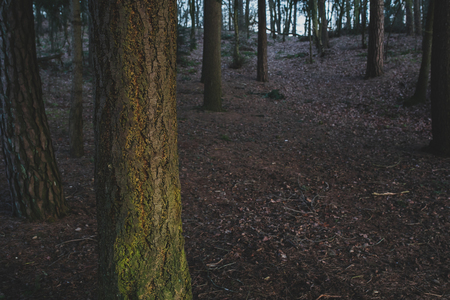 Dark Forest in Autumn.With selective focus on tree bark and plenty of copy space