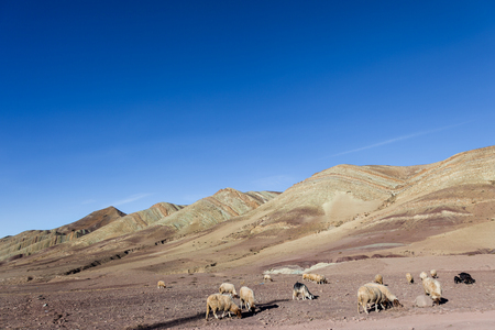 Sheep and goats grazing on stony ground plains on slopes of High Atlas mountains in Morocco