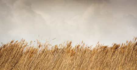 Border of reed or straw against sky