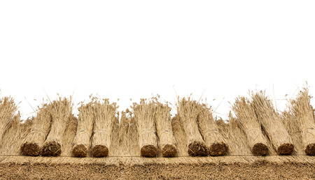 Thatched  roof of a house with reed , border of  straw. Isolated on a white background Stockfoto