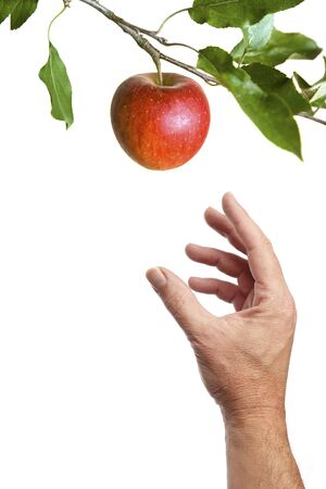 Hand picking an apple on a branch. Isolated on a white background Stockfoto