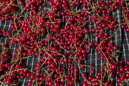 Red currant berries close up texture background. Red currant berry. Fresh red summer berries. Redcurrants top view