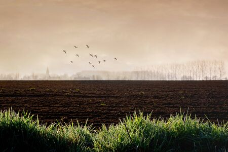 Plowed field at the edge of a village. Agricultural business. Farmland at dawn with focus on border of grass with dewdrops