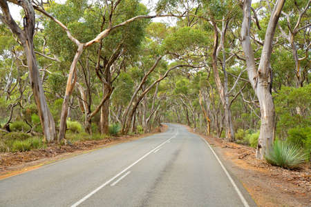 Road under gum trees Kangaroo Island South Australia photo